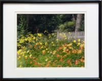 &quot;Daylilies&quot; - Photograph by Debby McIntosh